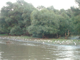 Danube Delta – a unique reservation in Europe
